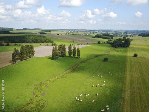 Fotobehang Pistache Ardennes Wallonie Belgique paysage bois environnement nature vert naturel campagne rurale