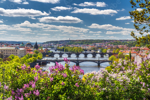 Staande foto Praag The blooming bush of lilac against Vltava river and Charles bridge, Prague