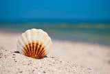sea beautiful white brown shell lies on a yellow sand on a background of blue sea and a white wave blue sky summer vacation vacation summer day heat beach beach - 181389542