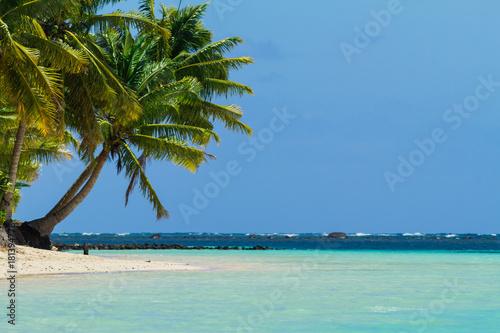 Aluminium Tropical strand palm trees, white sand beach, blue ocean