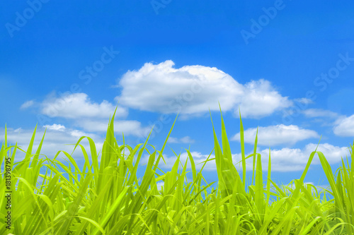 Poster Lime groen Bright Day Field Background
