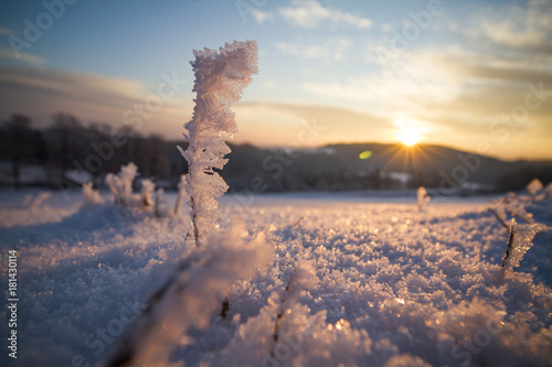 Poster Zalm Frost on grass during sunrise