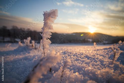 In de dag Zalm Frost on grass during sunrise
