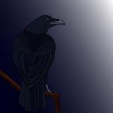 Vector illustration. Raven sitting on a branch.