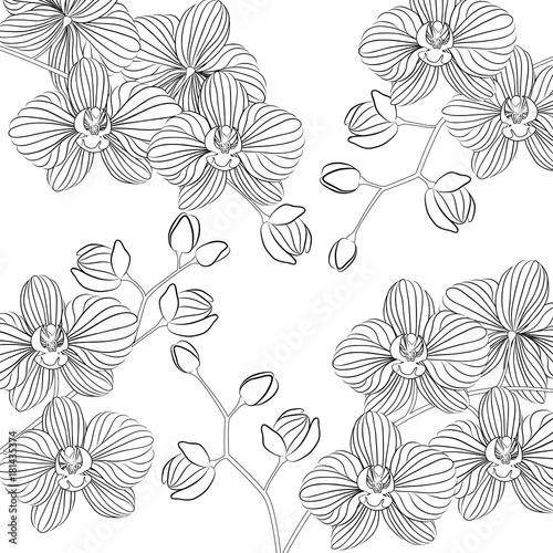 Ilustracji wektorowych. Piękna Phalaenopsis orchidea w kwiatu garnku. Czarno-biały wzór można wykorzystać do barwienia.