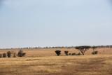 Die Wildnis von Tansania - Afrika - 181436706