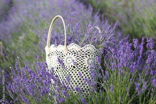 Papiers peints Lavande Flowering lavender field in June on the peninsula of Crimea