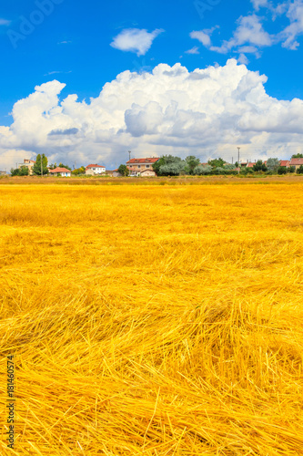 Wheat field and cloud sky Poster