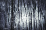 fantasy winter scenery, frozen trees in forest during snowfall - 181482932