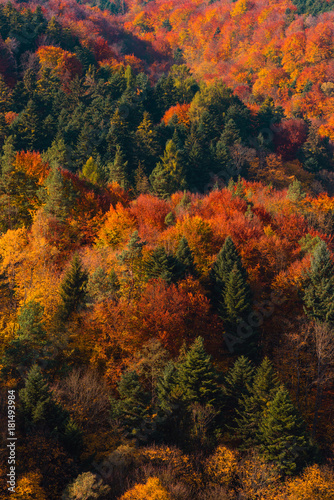 Foto op Canvas Herfst Vivid autumn forest on hill background