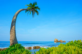 Coconut palm tree on exotic tropical island beach at summer clear day - 181494196
