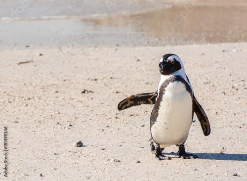 Plexiglas Pinguin Lächeln und Winken