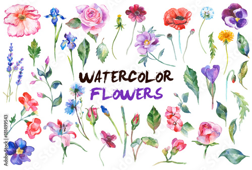 Watercolor flowers illustration