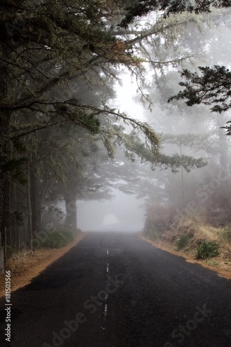 Tuinposter Weg in bos Las wawrzynowy