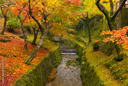 Staande foto Kyoto Japan, Kyoto Autumn beautiful maple tree with colorful autumn leaves