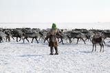 Beautiful reindeer in motion (running deer) in the snow