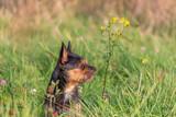 Hund in Wiese neben einer Blume - 181521331
