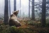 Braunbär im Wald - 181523156