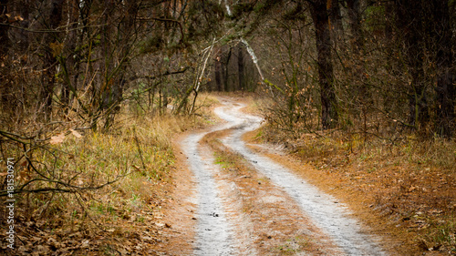 root road in forest