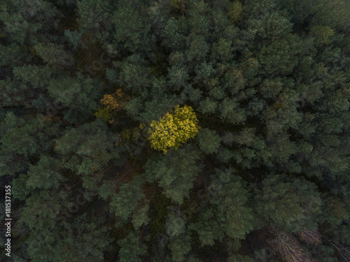 Top down view over pine tree forest during sun down on a cloudy day Poster