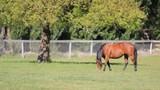 Horse grazes in field - 181553376