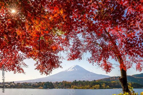 Foto op Plexiglas Bruin Mt. Fuji in autumn with red maple leaves