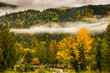 Forest in Bridal Veil Falls Provincial Park