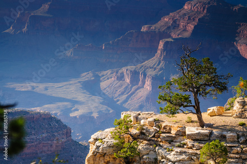 Fotobehang Natuur Tree on the Grand Canyon Rim