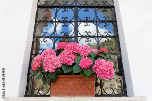 Fotobehang Hydrangea Fuchsia hydrangea and decorated window scenic view in Positano, Amalfi coast
