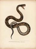 Illustration of a snake. - 181592116