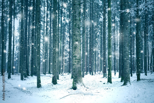 Tuinposter Groen blauw Winter season forest landscape with abstract snowflakes.