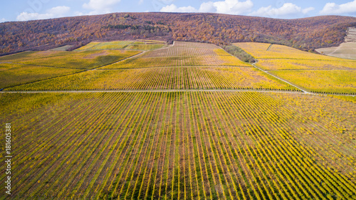 Staande foto Wijngaard Aerial view of a yellow autumn vineyard at sunset