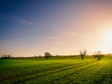 Red, Orange and yellow glow of a sunset over green pastures and trees in the English Countryside. - 181606153