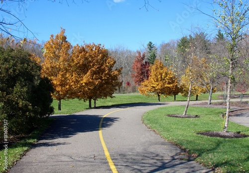 Fotobehang Olijf The curved path with the autumn trees on a sunny autumn day,