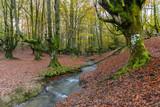Hayedo de Otzarreta, Parque Natural del Gorbea, Vizcaya (España) - 181609747