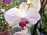 Цветы -  Орхидея и другие  - 181610356