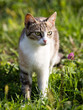 cat walking in the grass outdoors