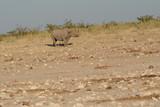 Rhino  in Africa - 181634351