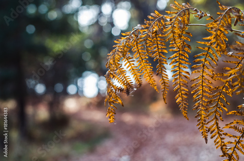 Beautiful autumn nature environment surrounded with trees golden brown yellow leaves - 181644383
