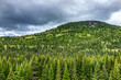 Green pine tree forest in summer with dark, cloudy sky in Quebec, Canada