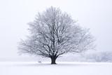 Baum Buche im Winter - 181685586