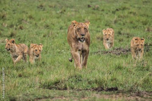 Fotobehang Lion LION WITH FOUR CUBS
