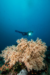 woman scuba diving over soft coral on a tropical reef
