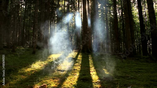 Poster Abstract cloudy smoke in the mossy and sunny forest landscape.