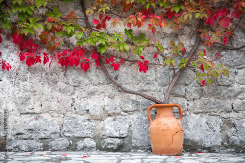 Autumn vine red and green leaves decorate stone wall. Bush growths from clay amphora near old rural country house. © Marina Andrejchenko
