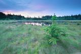 sunrise on wild forest lake - 181691964