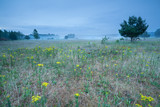 yellow wildflowers on misty meadow - 181691986