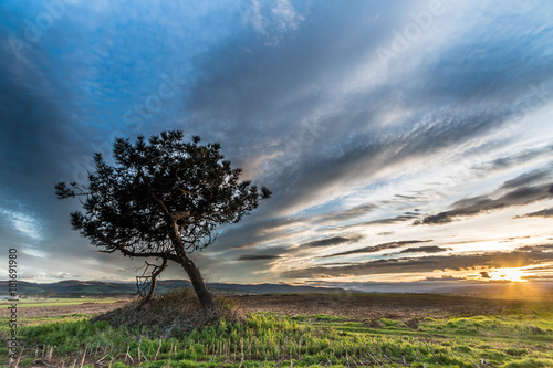 Fotobehang Lente lonely pine playing with clouds in the countryside