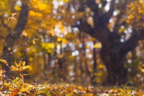 Foto op Canvas Herfst Autumn.