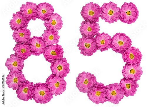 Poster Arabic numeral 85, eighty five, from flowers of chrysanthemum, isolated on white